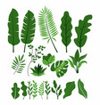 set collection green leaves herbs summer vector image vector image