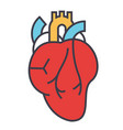 heart anatomy cardiology concept line vector image