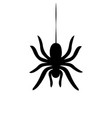 sider hanging on cobweb isolated vector image vector image