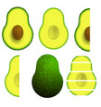 green ripe avocado fruit vector image