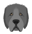 isolated newfoundland avatar vector image vector image