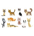 set cute cartoon kitties or cats with different vector image