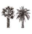 hand drawn palm trees vector image vector image