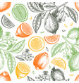 ink hand drawn citrus fruits backdrop lemons vector image
