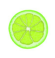 realistic lime citrus slice vector image vector image