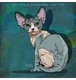 Sphynx Cat vector image vector image