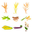 agriculture farm with healthy tasty organic food vector image