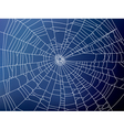 spider web2 resize vector image