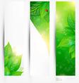 Abstract Leaf Design Set vector image