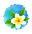 frangipani flower on blue watercolor vector image