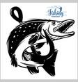 pike fishing emblem shirt pike fish logo vector image