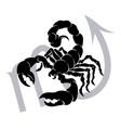 scorpio zodiac horoscope astrology sign vector image