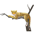 cartoon leopard lying on a tree branch vector image