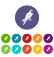 Falcon set icons vector image vector image