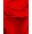 Macro image of dark red rose EPS 10 vector image vector image
