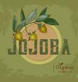 vintage jojoba plant design for organic cosmetics vector image vector image