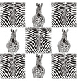 Pattern zebras for textiles vector image vector image
