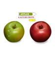 realistic background red and green fruits vector image