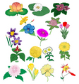 set of detailed flowers vector image vector image