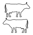 cow icon black fill color set flat vector image