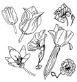 monochrome black and white flowers isolated on vector image