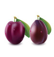 ripe plum with green leaves photo-realistic vector image vector image
