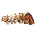 set of horses breeds 5 vector image vector image