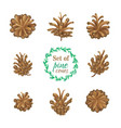 set of pine cones isolated on white background vector image