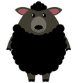 black sheep on white background vector image
