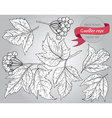 Clip art collection of hand drawn guelder rose vector image