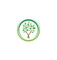 elegant circle tree leaf agriculture logo design vector image vector image