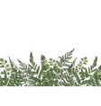 horizontal background with beautiful ferns wild vector image