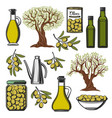 olive oil and vegetables product icons vector image vector image