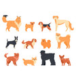 dogs breed character purebred dog pedigree cute vector image