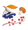 sketcn rowanberry and blue berry mushroom vector image