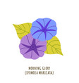 morning glory tropical flower vector image vector image