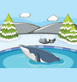 scene with whale swimming vector image