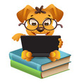 funny yellow dog sitting on books and reading vector image vector image