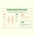 human receptor chart horizontal infographic vector image vector image