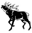 Red deer black and white
