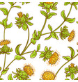 safflower plant pattern vector image
