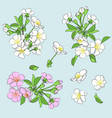 set of flowering branches vector image