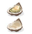 oyster shell vector image