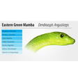 Eastern Green Mamba vector image vector image