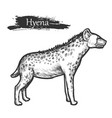hyena sketch zoo and african jungle wild animal vector image