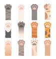 paw cats cute animals hands wild cats claws vector image vector image