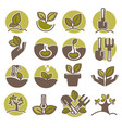 tree planting and growing process infographic vector image vector image