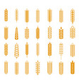 wheat rye and barley ear set vector image