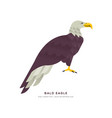 wild bald eagle bird isolated animal cartoon vector image