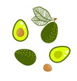 avocado green isolated vector image vector image